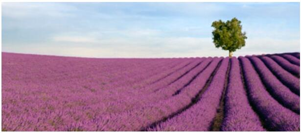 PROVENCE AS A DESTINATION