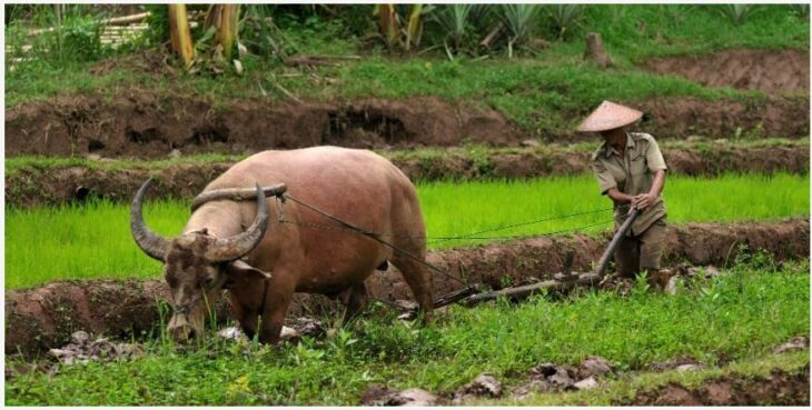 Try the Kamu tribe lifestyle in northern Laos